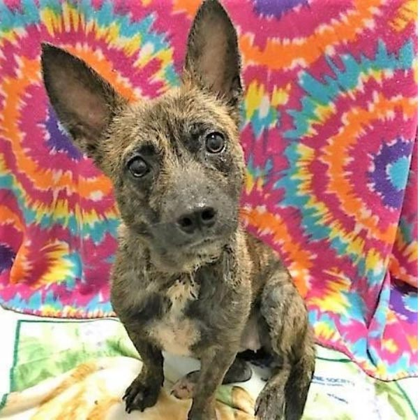 Adopt a Pet in Beaumont, TX